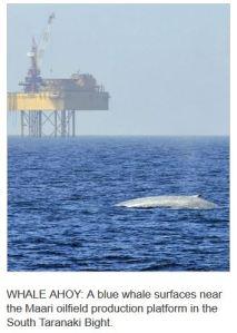 blue whale OMV rig Taranaki